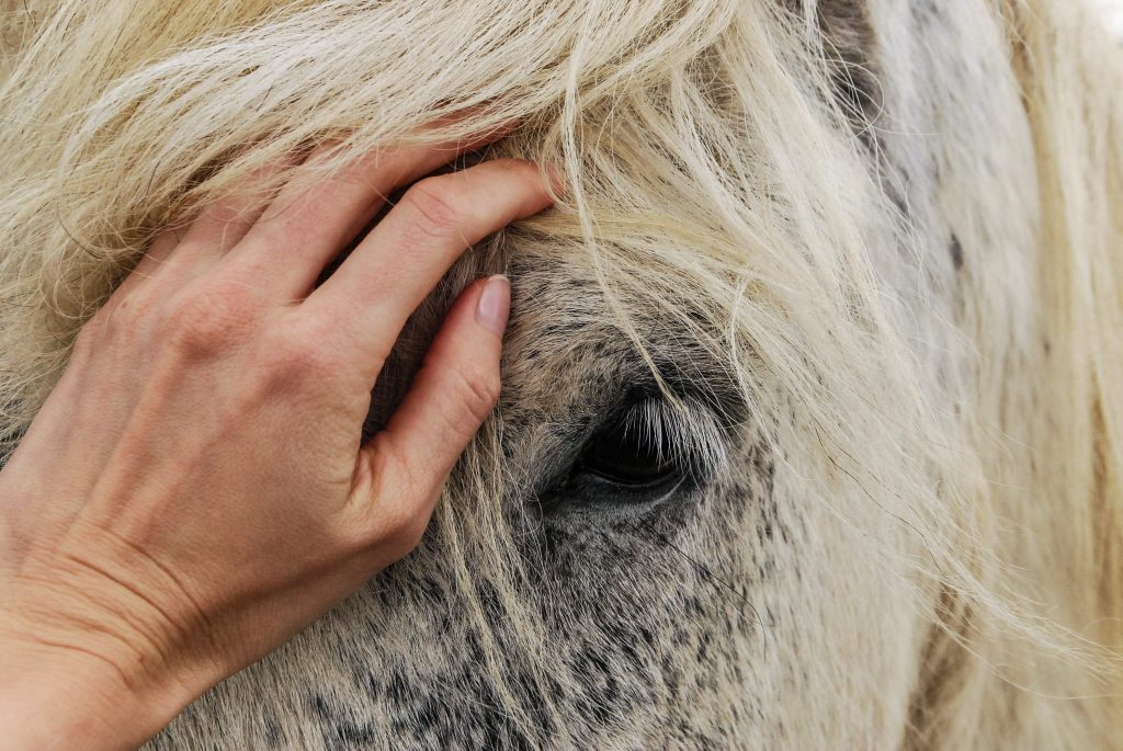 Acupressure for horse therapy