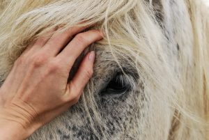 Equine therapist places hands on calm horse
