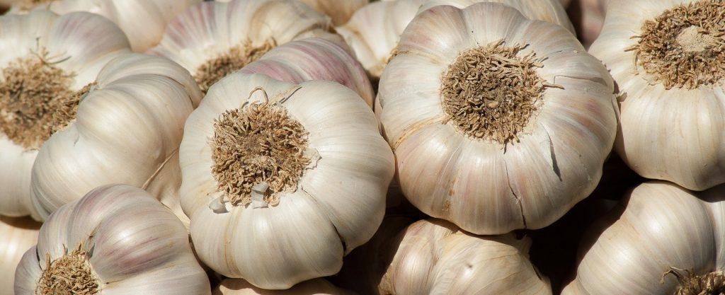 Garlic for horses banner