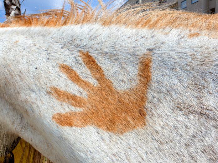 Equine chiropractor image