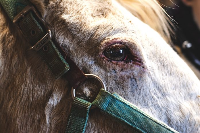 CRANIAL SACRAL THERAPY FOR HORSES PIC