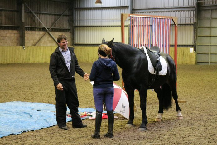 Natural Horsemanship - training