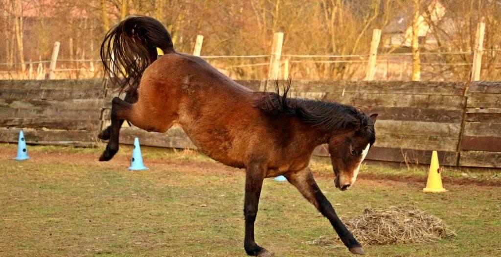 Horse behaviour problems - bucking horse